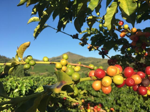 Top coffee growing countries